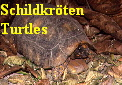 Schildkr�ten Trutles Testudines